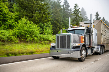 Dark gray classic big rig semi truck with turned on lights transporting semi trailer for transporting animals running on the foggy green highway road