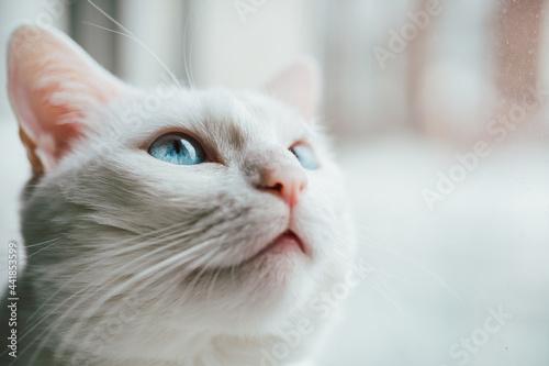 Fotografie, Tablou Close-up Of A Cat