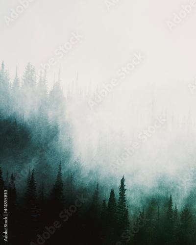 Fotografia Pines Trees Against Cloudy Sky