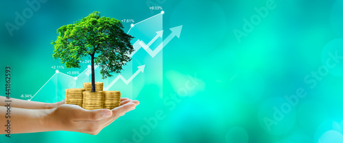 Photo Hand holding Growing tree on coins with stock graph over Green background