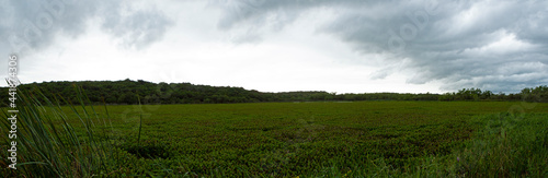 Fotografie, Obraz The wetland