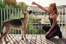 Female Runner Pouring Water From Bottle On Dog After Training