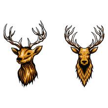 Deer Head Vector Illustration