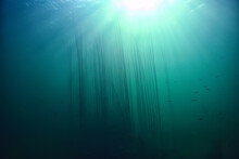 Lake Background Water Underwater Abstract / Fresh Water Diving Background Nature Underwater Ecosystem Background