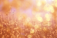 Abstract Summer Background Texture Of Yellow Flowers In The Field, Beautiful Nature Sunny Day Wild Flower