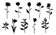Vector Silhouettes Of Garden And Field Spring Flowers With Leaves, Flowering Plants, Twigs, Floral Designe, Hand Drawing, Black Color, Isolated On A White Background