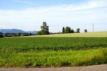 Landscape At Oekingen At Summer With Agriculture Field Int The Foreground. Photo Taken June 26th, 2021, Oekingen, Switzerland.