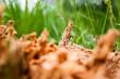 Nahaufnahme  eines Baumstumpfes, der von Ameisen bevölkert wurde. Es sind deutlich die Gänge zu sehen