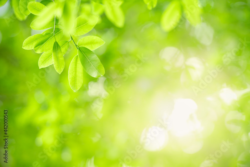 Photo Beautiful nature view green leaf on blurred greenery background under sunlight with bokeh and copy space using as background natural plants landscape, ecology wallpaper concept