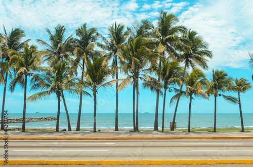 Palmeras, Boulevard Adolfo Ruiz Cortínez. Boca del Río, Veracruz. Fotobehang