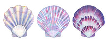 Seashell Set Watercolor Illustration. Watercolor Hand Drawn Sea Shells Isolated On White Background