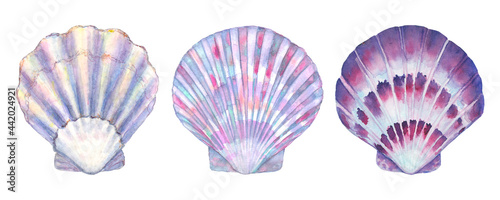 Canvas-taulu Seashell set watercolor illustration