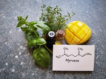 Structural Chemical Formula Of Myrcene With Green Basil Leaves, Thyme Twigs, Mango, And Two Glass Bottles Of Essential Oil. Myrcene Is A Terpene, A Component Of Essential Oils, Is Found In Many Herbs.