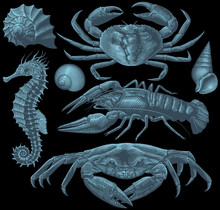 Sea Creatures. Design Set. Editable Hand Drawn Illustration. Vector Engraving. Isolated On Black Background. 8 EPS