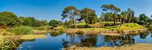 Western Lowland Gorilla Enclosure At The Werribee Open Range Zoo Melbourne