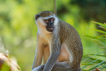 Monkeys At The Werribee Zoo Melbourne