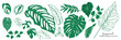 Tropical leaves collection. Vector isolated elements on the white background. summer clipart