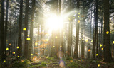 Fototapeta Las - Shining sunlight with beams in fall season woods with trees and falling colorful leaves.