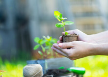 Potted Plant In Hands. Preparing For Landing. The Concept Of Ecology, The Surrounding World