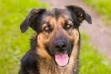Fototapeta Zwierzęta - Pies to świetny towarzysz dla człowieka.
