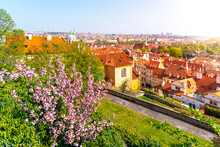 Prague Lookout From Hradcany On Sunny Spring Day. Greenery And Blooming Trees. Czech Republic