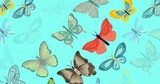 Composition of multiple rows of butterflies on blue background