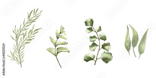 Fototapeta Vector set botanical elements - wildflowers, herbs and wild foliage
