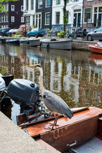 Grey Heron On The Boat In Amsterdam