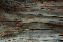 Closeup Of A Tree Trunk Without Bark. Macro Shot. Wood Texture.