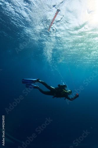 Vászonkép scuba diving in the sea