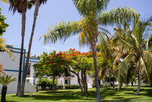 Garden With Green Grass, Palm Trees And A Flamboyant In Bloom In The Town Of Mogán, Gran Canaria.