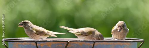 Fotografia Little songbirds sitting on a bird feeder