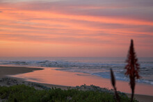 A Coastal Landscape Scene With A Beautiful Pink Sunrise And Aloe Plant Flower In Foreground