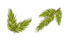 Evergreen Pine Tree Branch With Needle Leaves Vector Set