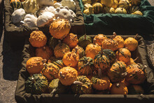 Closeup Shot Of A Box Full Of Warty Pumpkins Displayed In A Market