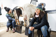 Happy Girl Milking Goats With Mother In Barn