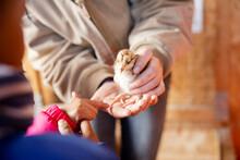 Close Up Farmer Holding Tiny Chick
