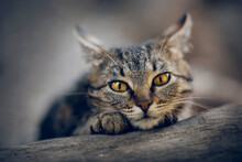 Portrait Of A Street Homeless Tabby Cat