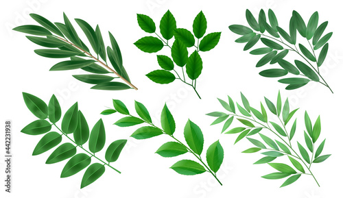 Fotografie, Obraz Realistic collection of green branches of deciduous trees with leaves isolated vector illustration