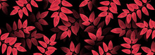 Autumn Background Red Colors. Realistic Leaves. Texture Design For Web Banner, Print, Wallpaper. Vector Illustration.