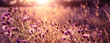 Seasonal Sale Website Banner With Wild Autumn Grass, Flowers On A Meadow In The Rays Of The Golden Hour Sun. Romantic Artistic Vintage Autumn Field Landscape Wildlife Background With Morning Sunlight