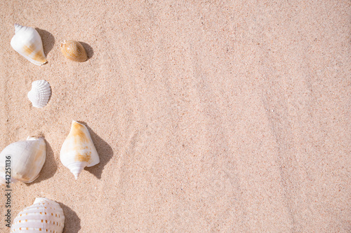 Photo Sea shell conch on sand beach at coast