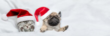 Funny Kitten And Pug Puppy Wearing Santa Hats Sleep Together  Under A White Blanket On A Bed At Home. Top Down View. Empty Space For Text