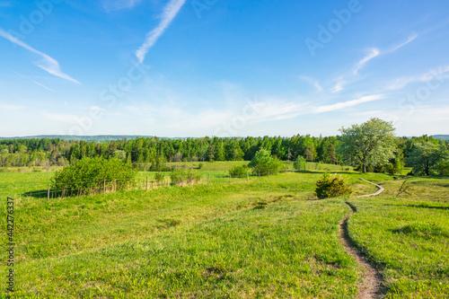 Obraz na plátně Walking path on a rich fen in a beautiful summer landscape