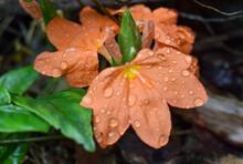 Flores Silvestres Iniciando Primavera