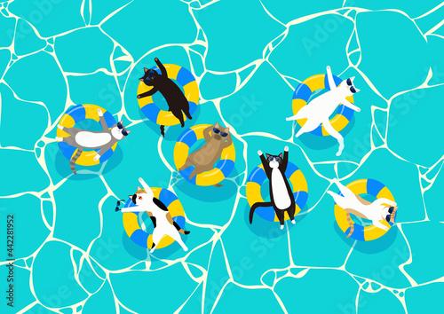 Obraz na plátně サングラスをした7匹の猫がのんびりする夏のプール 黄色と青のうきわと揺らぐ水面模様