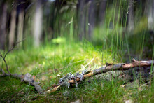 Gray Moss On The Branch
