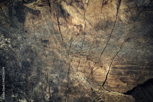 Fototapeta Old wooden background. Timber texture.