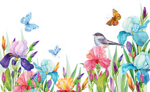 Irises And Birds.Beautiful Floral Background For Postcards On An Isolated White Background