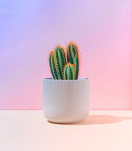 Fluorescent Neon Cactus On Pastel Pink And Blue Gradient Background. Minimal Creative Scene. Nature Concept.